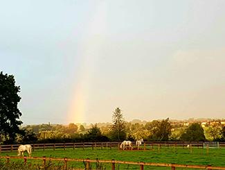 rainbow-field