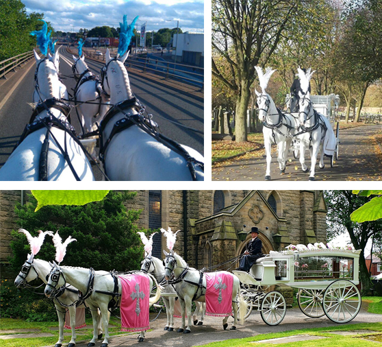Horse Drawn Carriages for hire within Longbridge